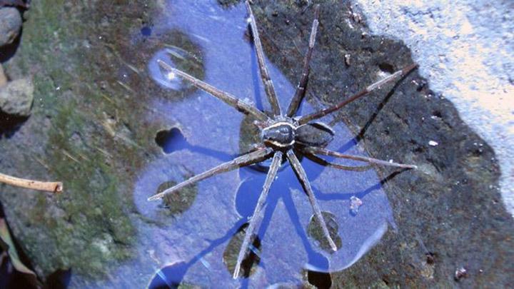 brian spider