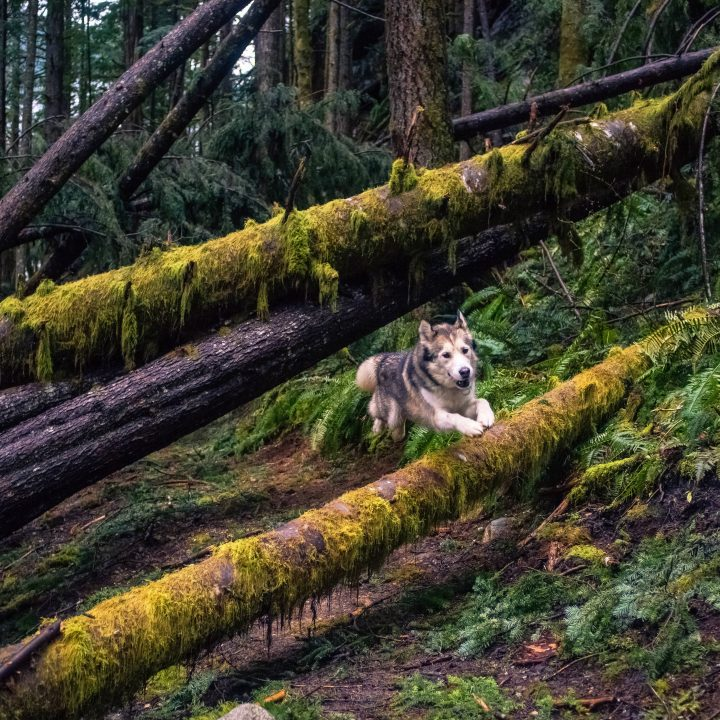 dog on forest moon of endor