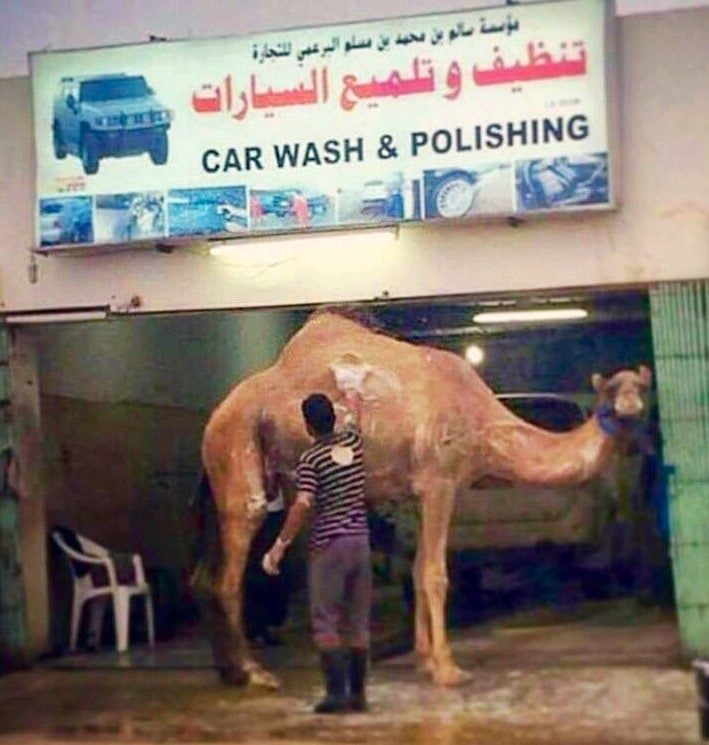 uae camel wash