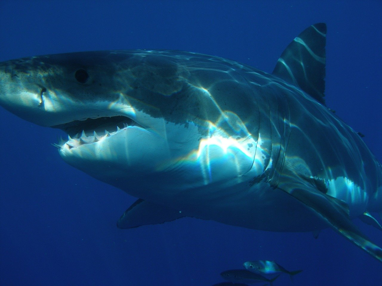10 ways to survive a shark attack